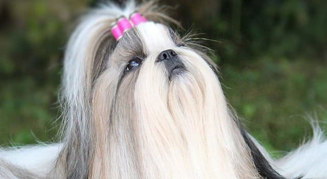 природа Запитання-цікавинка: Як називається ця порода собак?