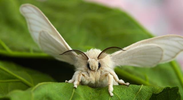 природа Запитання-цікавинка: Яка метелик зображена на фото?