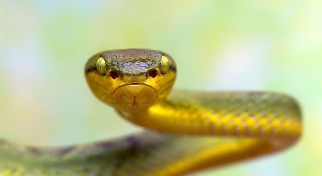 natura Pytanie-Ciekawostka: Jakie zwierzęta znane są ze swojej umiejętności zabijania jadowitych węży?