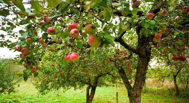 Наука Запитання-цікавинка: Хто вивів понад 150 сортів плодових і ягідних культур?
