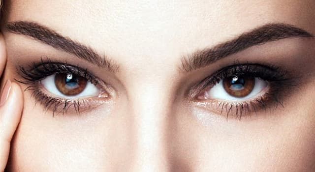 Wissenschaft Wissensfrage: Was liegt zwischen Linse und Netzhaut des Auges?