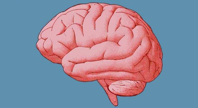 Wissenschaft Wissensfrage: Wer von diesen Personen gilt als Begründer der Psychoanalyse?