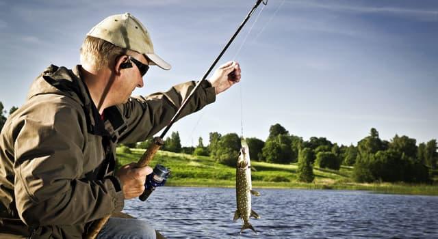 Культура Запитання-цікавинка: Що необхідно мати при собі, для того, щоб порибалити в Німеччині?