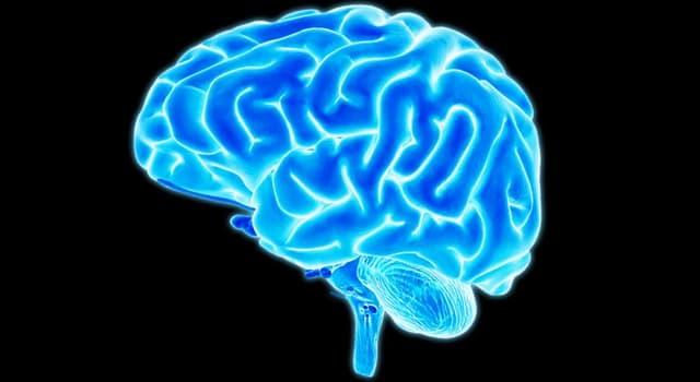 Wissenschaft Wissensfrage: Das Gehirn ist ein Teil des ...