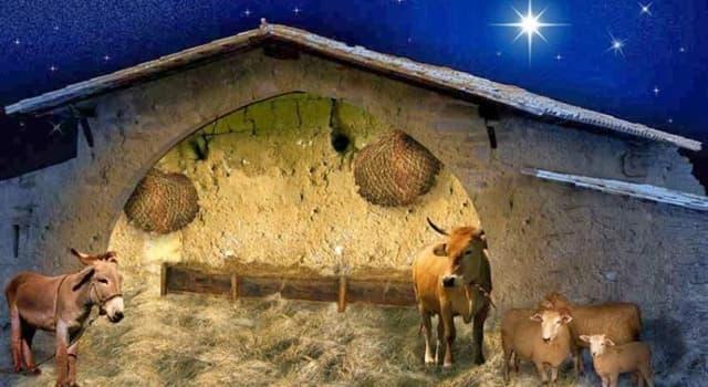 historia Pytanie-Ciekawostka: Gdzie urodził się Jezus?