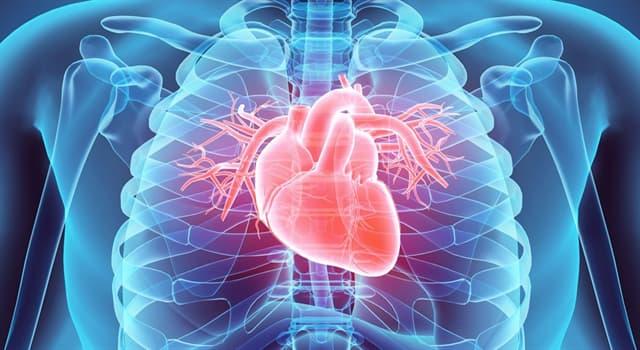 nauka Pytanie-Ciekawostka: Jak nazywa się prawidłowy rytm serca?