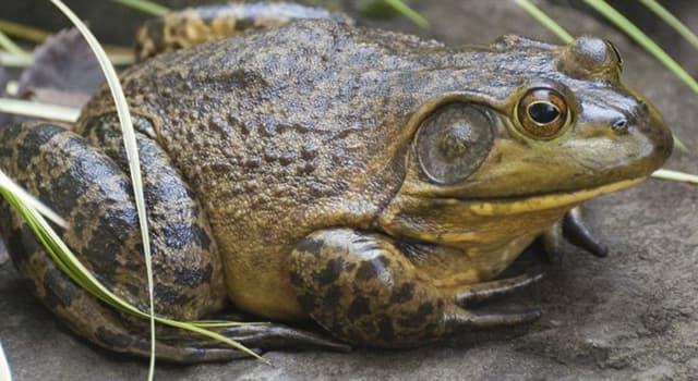 Kultura Pytanie-Ciekawostka: Jak nazywała się żaba rycząca w przebojowej piosence Three Dog Night?