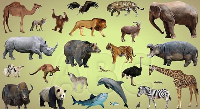 natura Pytanie-Ciekawostka: Jakie zwierzę może jechać najdłużej bez wody pitnej?