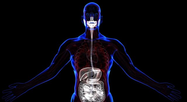 nauka Pytanie-Ciekawostka: Który z tych narządów nie jest częścią układu pokarmowego?