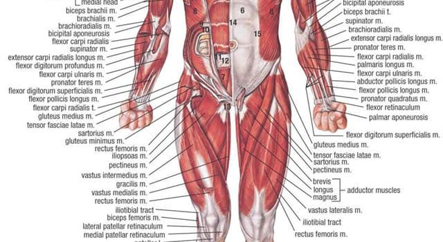 nauka Pytanie-Ciekawostka: Której części ciała człowieka dotyka miażdżyca?