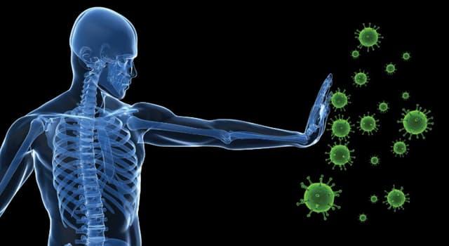 Wissenschaft Wissensfrage: Was sind Interferone?