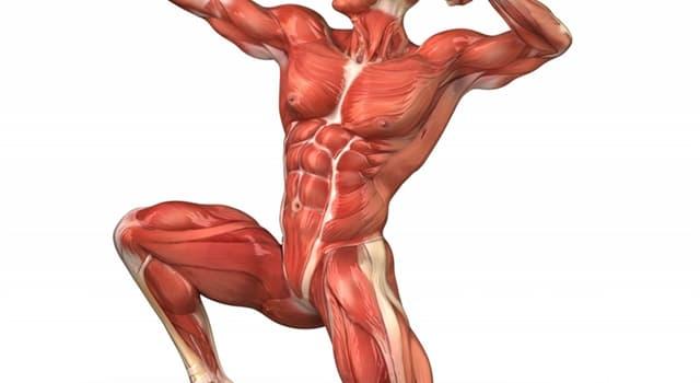 Wissenschaft Wissensfrage: Welcher Körperteil kann von der Arthrose betroffen werden?