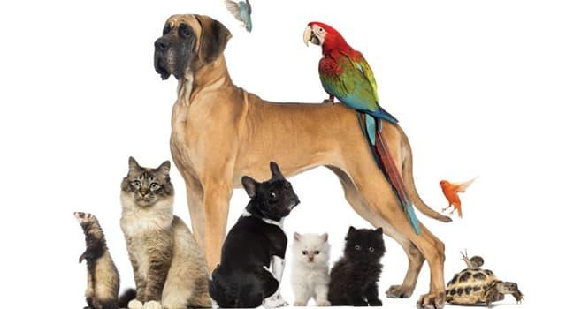 """Natur Wissensfrage: Welches Tier hat den wissenschaftlichen Namen """"Canis lupus familiaris""""?"""