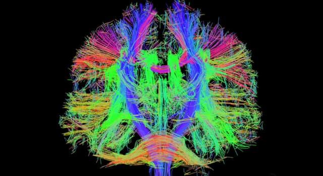 Wissenschaft Wissensfrage: Wer gilt als Vater der Kognitiven Verhaltenstherapie?