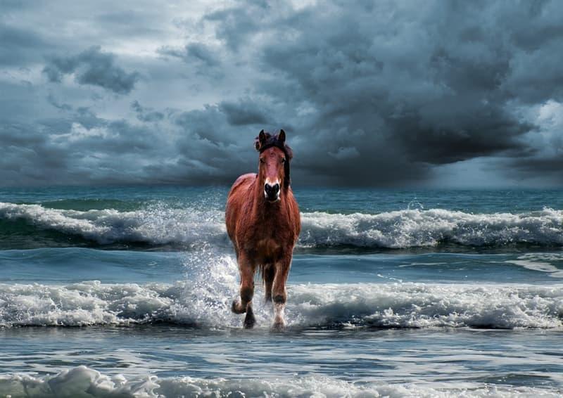 """Naturaleza Pregunta Trivia: ¿A qué se denomina comunmente """"Caballito de mar""""?"""