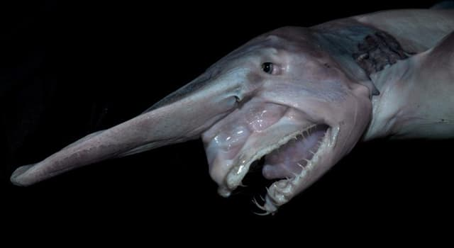 natura Pytanie-Ciekawostka: Co to za ryba?