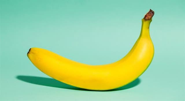 natura Pytanie-Ciekawostka: Do jakiej kategorii owoców należy banan?