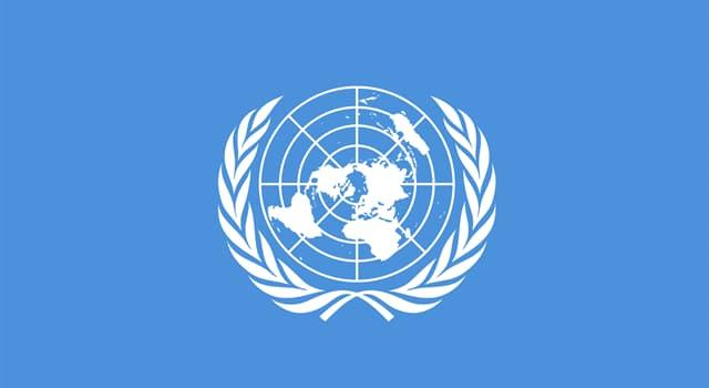 Geografia Pytanie-Ciekawostka: Gałązki jakiego drzewa pojawiają się na fladze ONZ?