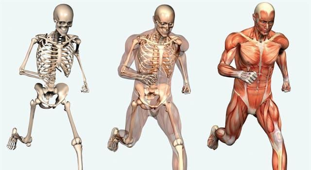 nauka Pytanie-Ciekawostka: Jaka tkanka w ludzkim ciele jest najtwardsza?