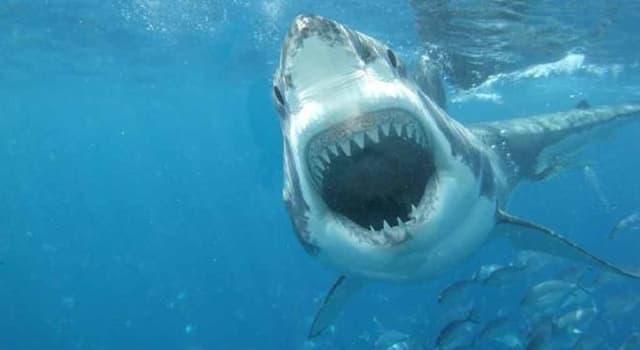 """społeczeństwo Pytanie-Ciekawostka: Jakie wydarzenie jest znane jako """"największy atak rekinów w historii""""?"""