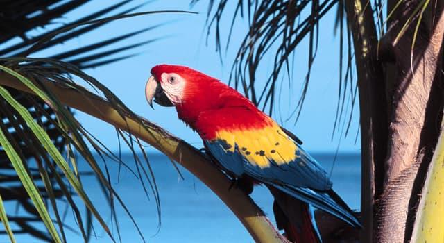 """natura Pytanie-Ciekawostka: Jakiego ptaka nazywano również """"morską papugą""""?"""