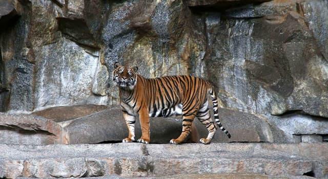 Суспільство Запитання-цікавинка: Який зоопарк є найбільшим в Європі за територією?