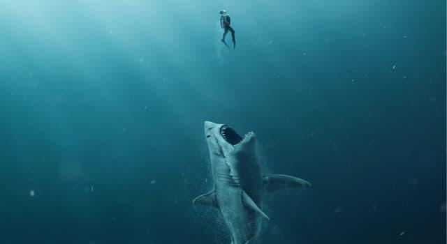 """Filmy Pytanie-Ciekawostka: Który aktor zagrał rolę Jonada Taylora w filmie """"The Meg"""" z 2018 roku?"""