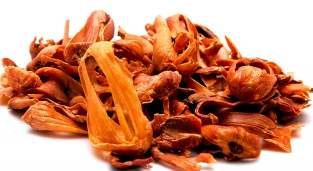 Nature Trivia Question: Which tree seed is used to make the spice mace?