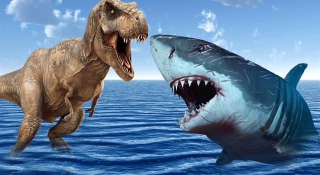 natura Pytanie-Ciekawostka: Obecnie wymarły, jaki rekin uważany jest za największy na Ziemi?