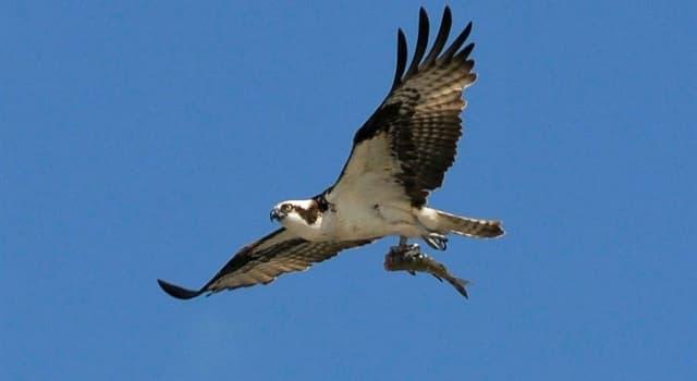 Natur Wissensfrage: Was für ein Vogel ist auf dem Foto?
