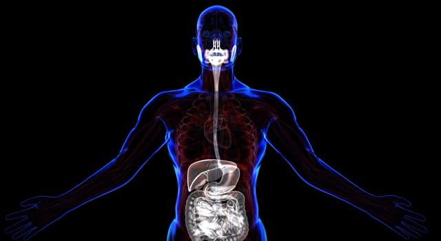 Wissenschaft Wissensfrage: Was gehört nicht zum Verdauungstrakt?