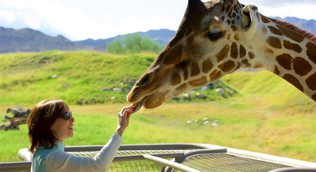"""Natur Wissensfrage: Welche Gattung neben Giraffen gehört zur Familie der """"Giraffenartigen""""?"""