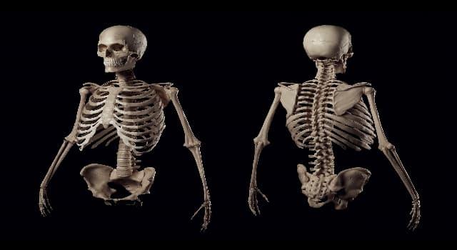 Wissenschaft Wissensfrage: Welches Körpergewebe verbindet Muskeln mit Knochen?