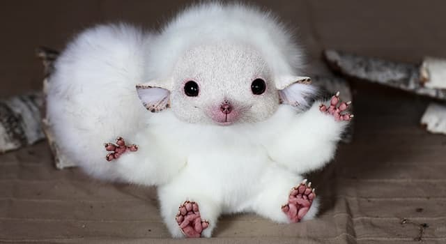 Nature Trivia Question: What breed of animal is a 'Blanc de Hotot'?