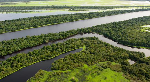 Geography Trivia Question: What is a várzea forest, which is found in the Amazonian Basin?