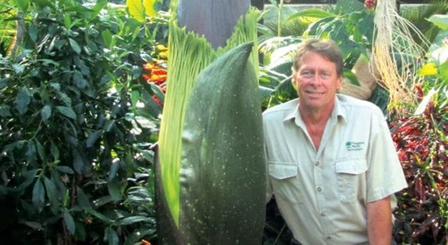 Nature Trivia Question: What is the world's largest flower?