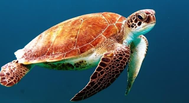 Nature Trivia Question: Which ability do sea turtles lack?