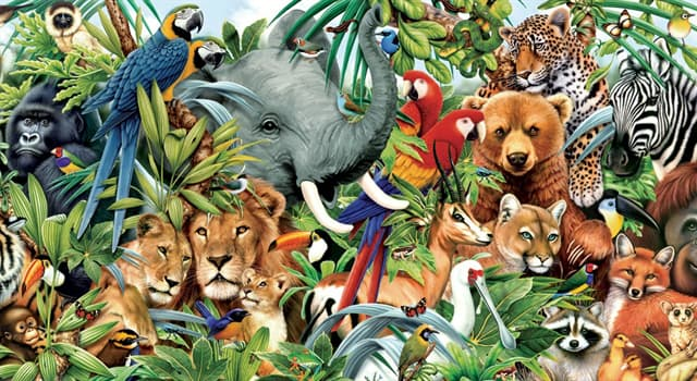 Nature Trivia Question: Which animal has a panoramic field of view?