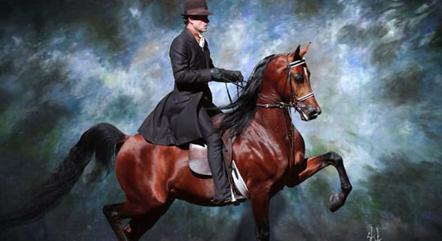 Sport Trivia Question: Which is not a competition class in an average American horse show?