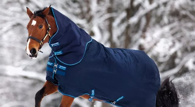 Культура Запитання-цікавинка: Що з перерахованого - це покривало для коня?