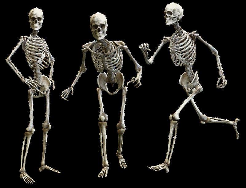 Суспільство Запитання-цікавинка: Що таке скелетон?