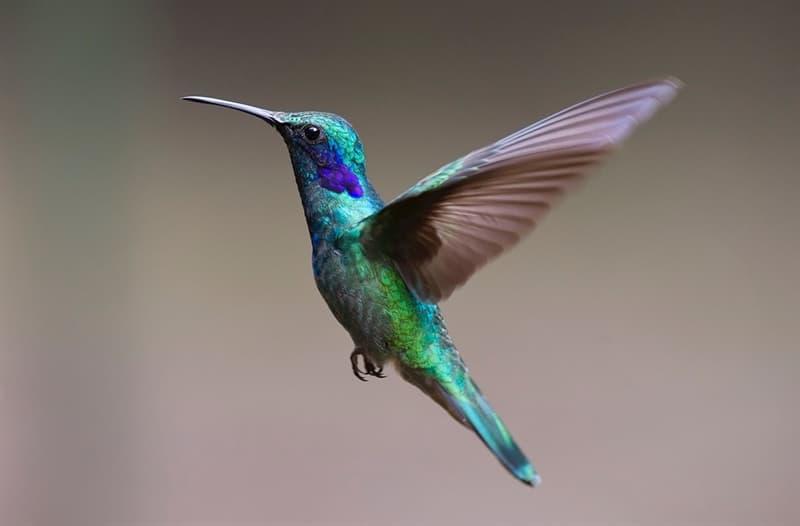 Naturaleza Pregunta Trivia: ¿Cuál es el ave nacional de Ecuador?