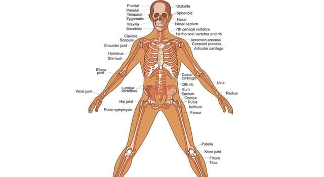 Wissenschaft Wissensfrage: Ein Hohlraum mit dem Fachbegriff Cavum cranii liegt in welchem Teil des menschlichen Körpers?