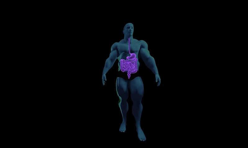 natura Pytanie-Ciekawostka: Ile długości ma przewód pokarmowy człowieka?