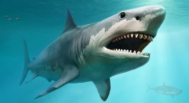 natura Pytanie-Ciekawostka: Jak oddychają rekiny?