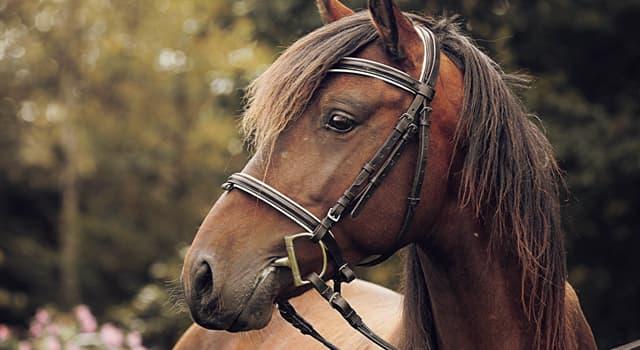 Культура Запитання-цікавинка: Як називається кінська упряж, приналежності для запряжці, седланія і управління кіньми?