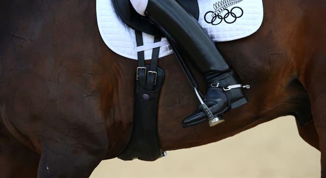 Культура Запитання-цікавинка: Як називається широкий міцний ремінь, призначений для утримування сідла на коня?