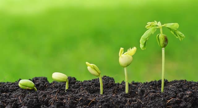 природа Запитання-цікавинка: Яке з перерахованих рослин отруйно?