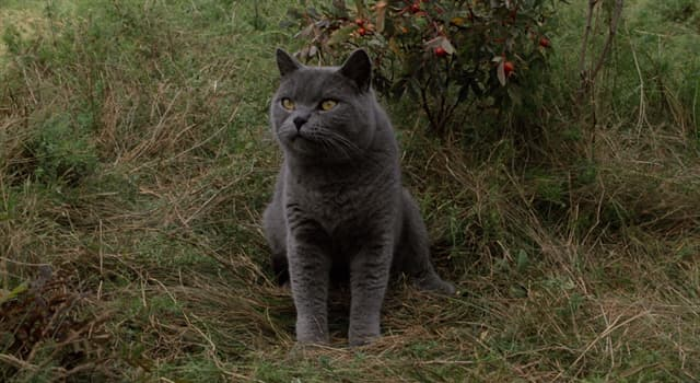"""Культура Запитання-цікавинка: Хто є автором роману """"Кладовище домашніх тварин""""?"""