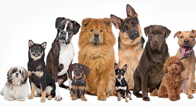 natura Pytanie-Ciekawostka: Która z tych psów jest najmniejsza?